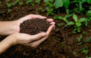plant-growth-soil-microbiome