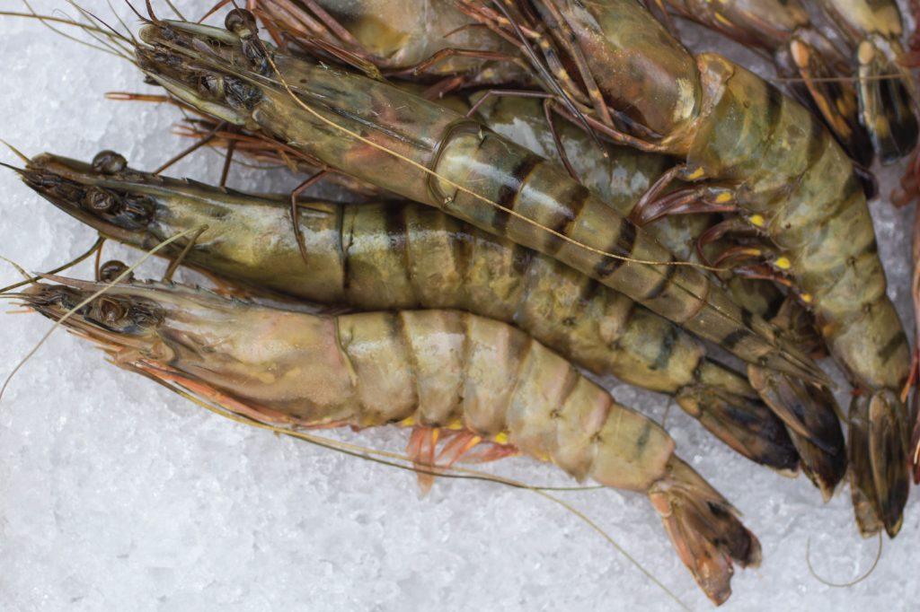 aquaculture-probiotics-rao