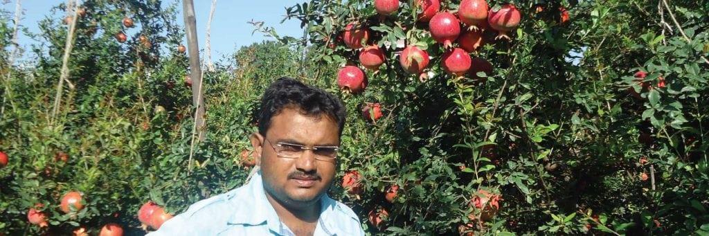 case-study-pomegranate