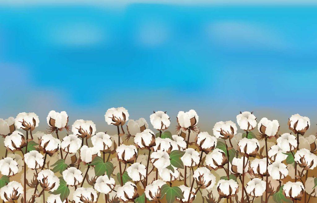 Magic Gro Plus - Improve yield & immunity of plants organically