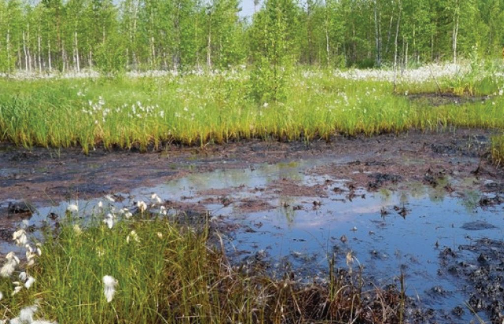 Natural Bioremediation of Water Bodies with Bioclean FOG