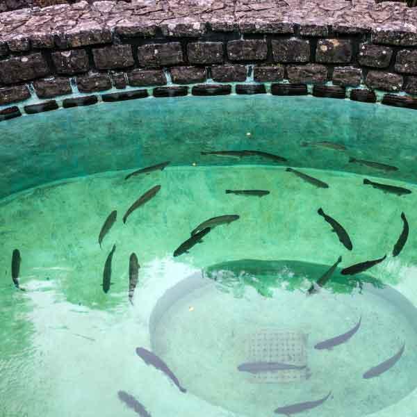 aquaculture-004