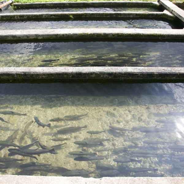 aquaculture-006