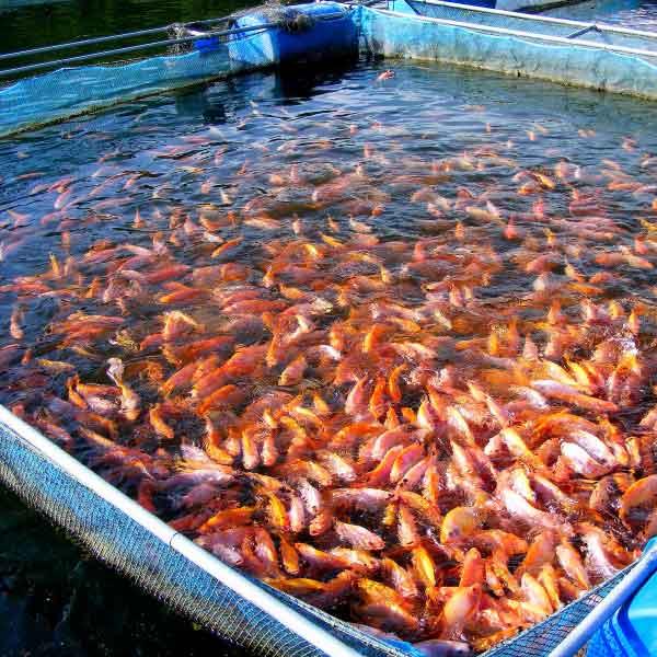 aquaculture-010