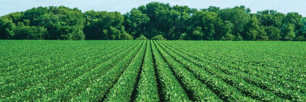 Improve yield & productivity using organic growth-promoting solutions like Magic Gro Super