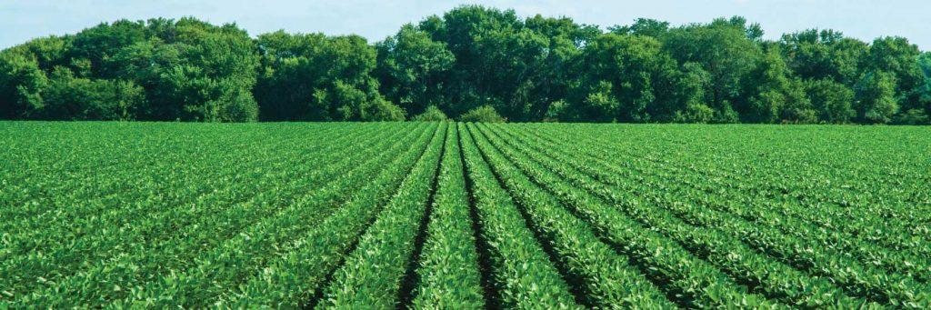 Improve yield & productivity using organic growth-promoting solutions like Magic Gro Super
