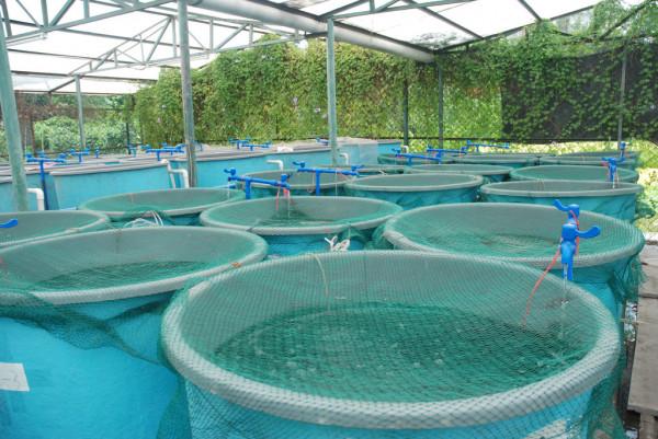 Probiotics in aquaculture