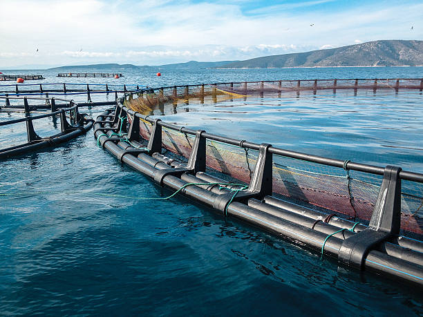 What Is Aquaculture & Why It Is Important?
