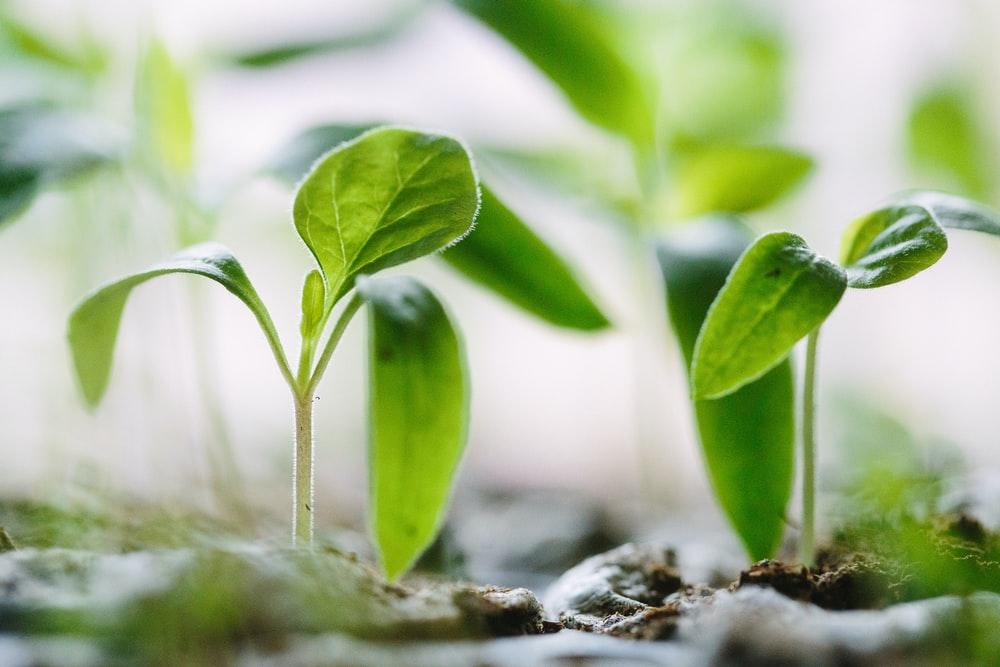Biostimulants in agriculture